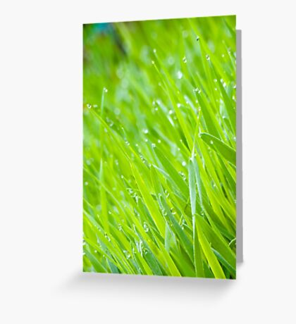 Fresh Green Grass 6 Greeting Card