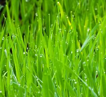 Fresh Green Grass 7 by AnnArtshock