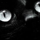 Cat Eyes by Betsy  Seeton