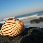 Stripped Shell by craigNdi