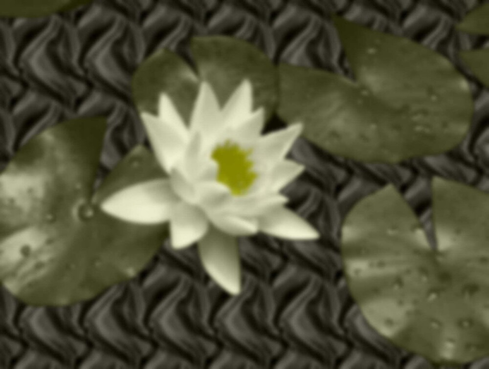Water Lily by eirien
