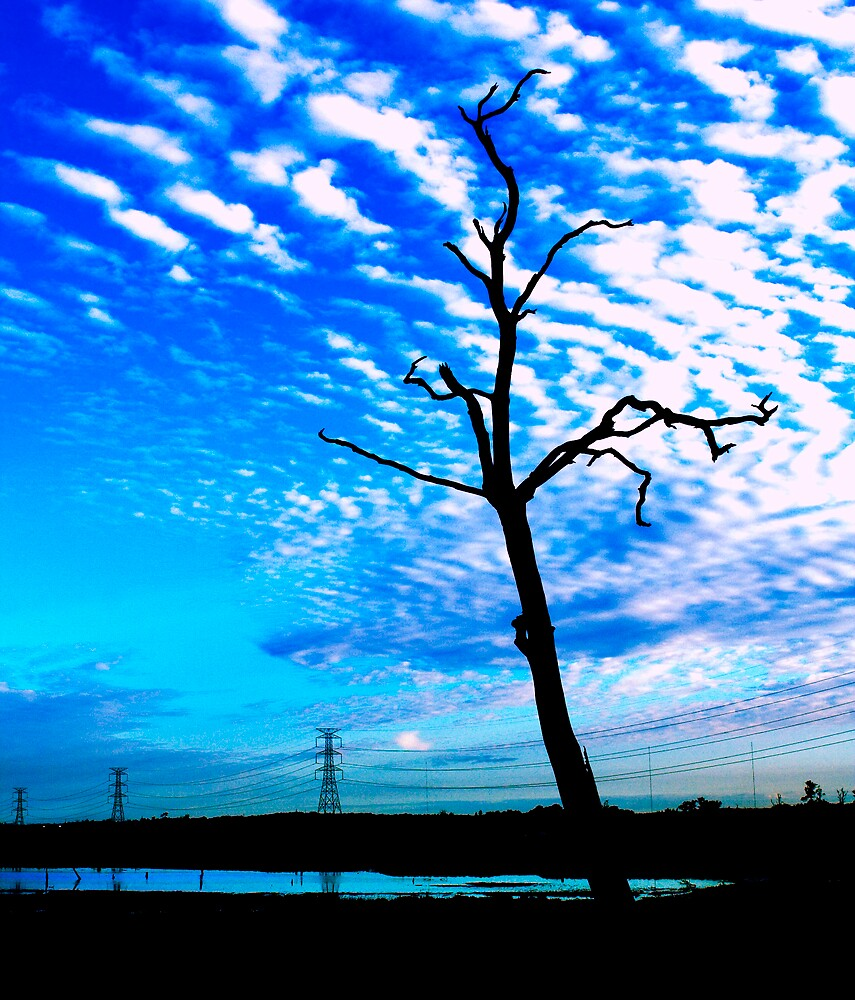 Tree Power by Darren Anderson