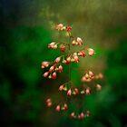 Flora by Lynn Starner