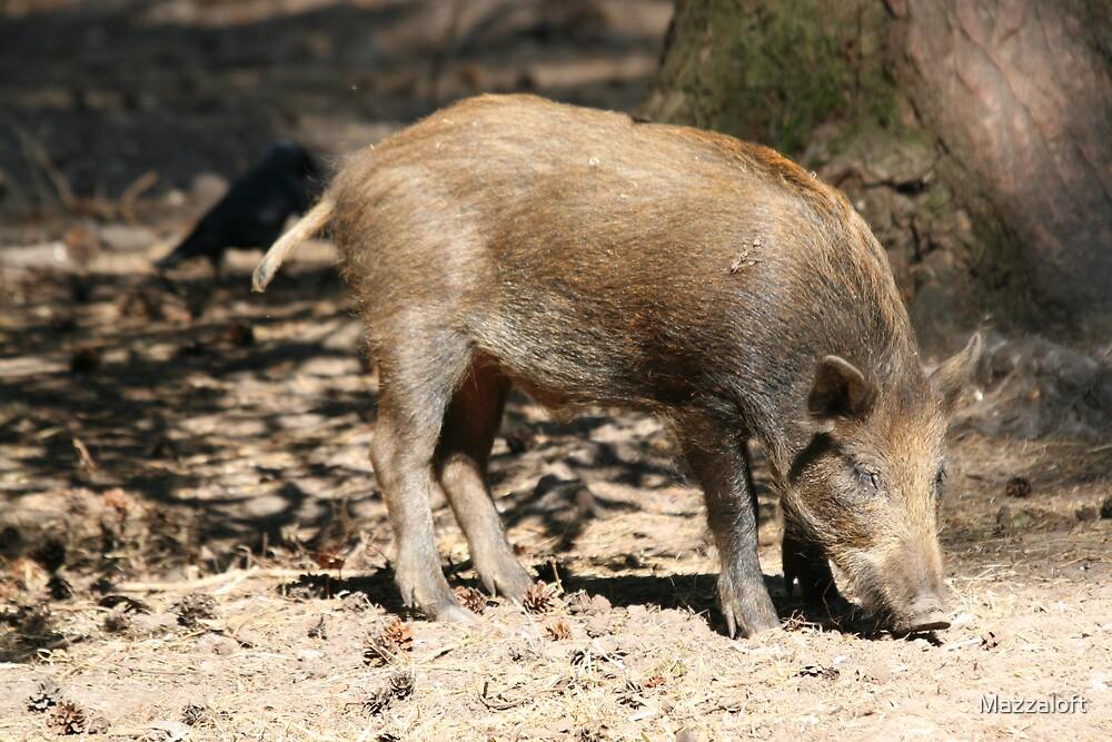 Wild Boar by Mazzaloft