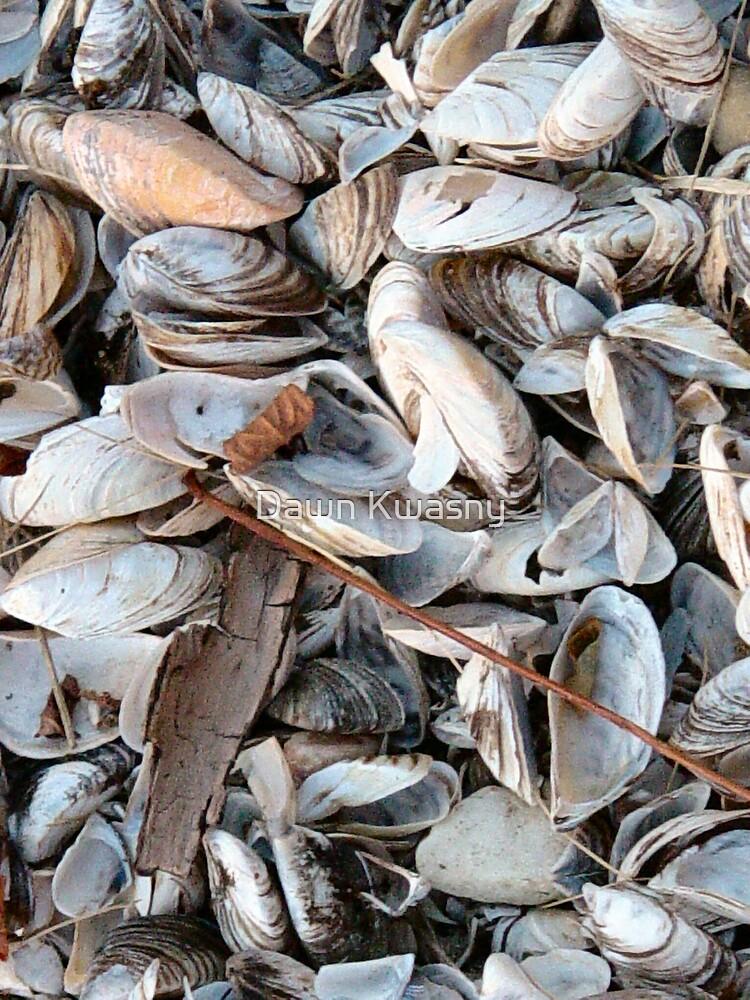 Tiny Shells by Dawn Kwasny