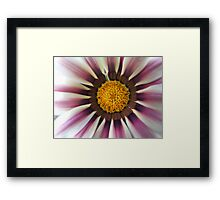 Rasberry Ripple Daisy... Framed Print