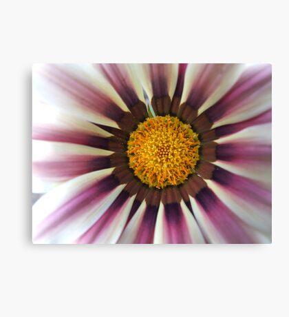 Rasberry Ripple Daisy... Canvas Print