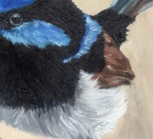 Superb Fairy Wren - Australian Bird Sticker