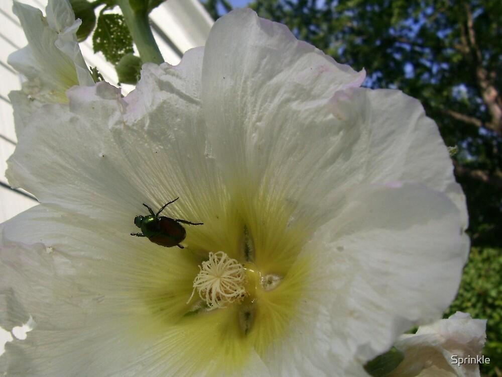 Japenese Beetle's Bed by Sprinkle