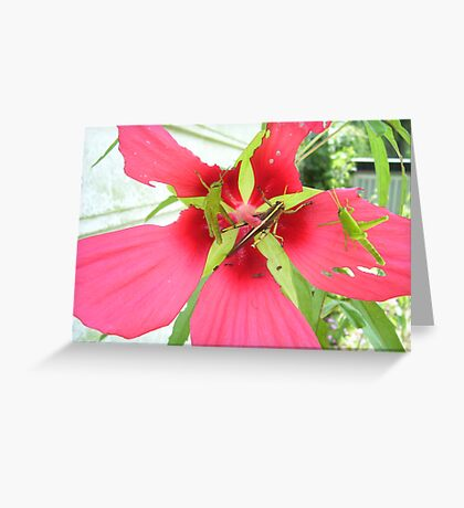 Three for Lunch Greeting Card