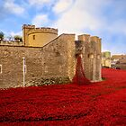 Poppies At Tower Of London by StephenRphoto