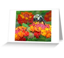 Psychedelic Afternoon ! Greeting Card
