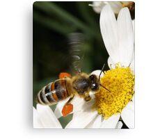 A Little Taste of Nectar! Canvas Print