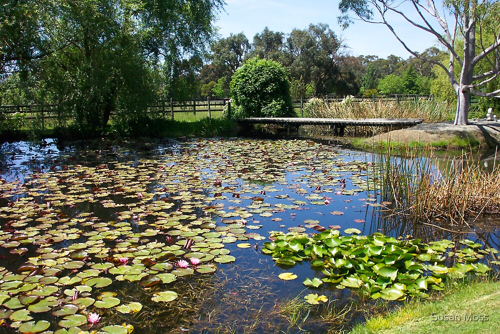 Rural Waterlily pond by Susan Moss