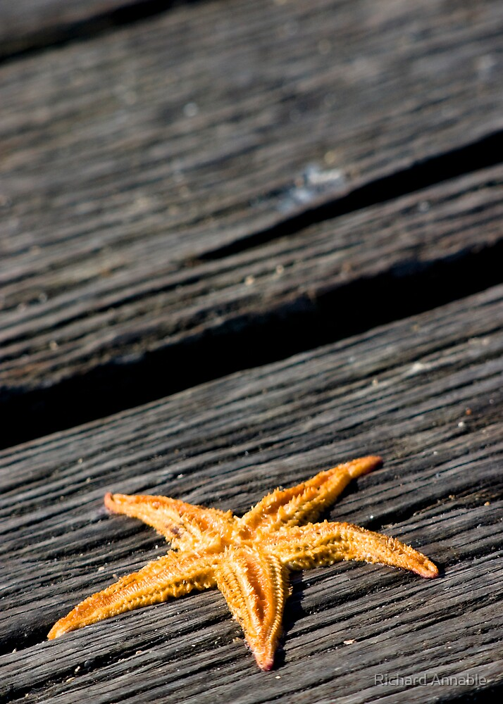 Starfish by Richard Annable