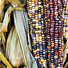 Colorful Corn by debidabble
