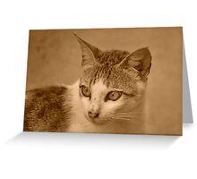Kitty v.5 Greeting Card