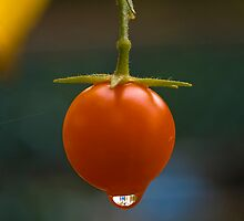 One tomato by Jeffrey  Sinnock