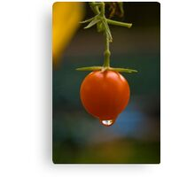 One tomato Canvas Print