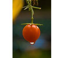 One tomato Photographic Print