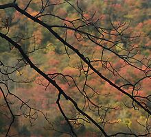 Autumn Branches by Jeff Johns