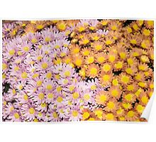 Floral Overflow - Happy Pink and Orange Autumn Mums Poster