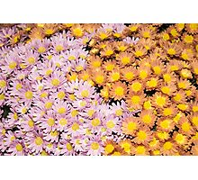 Floral Overflow - Happy Pink and Orange Autumn Mums Photographic Print