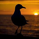 Seagull Sunset by Chris Annable