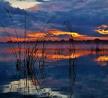 Orange with blue, and reed reflections by JeffreyG