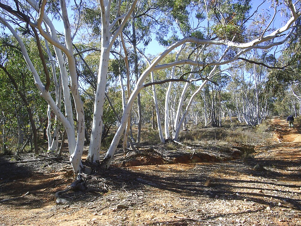 Ghost Gums by peterfrench