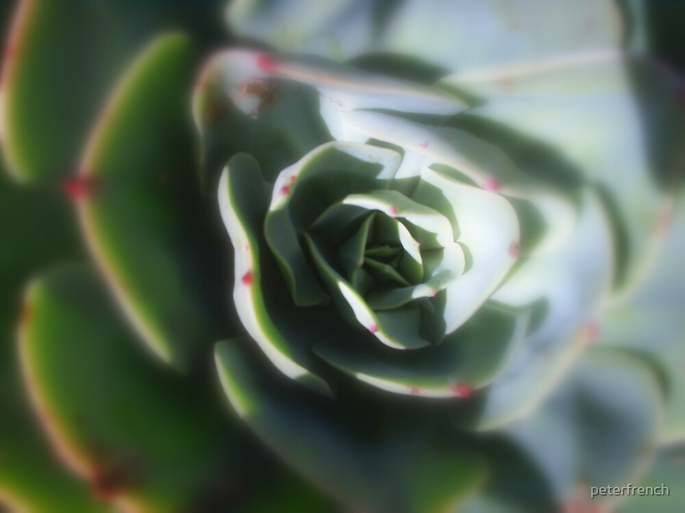 succulents by peterfrench