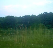 Grass2 by Awelker