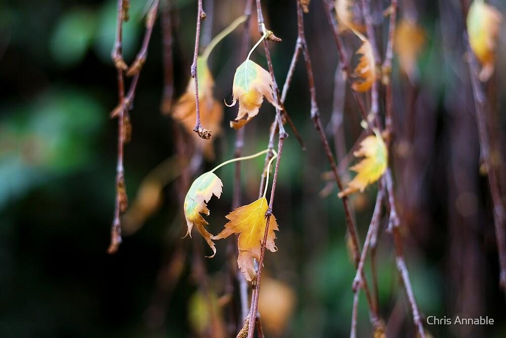 Autumn Fall by Chris Annable