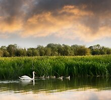 Swan and cygnets on the Isis (River Thames) by Andrew Bret Wallis