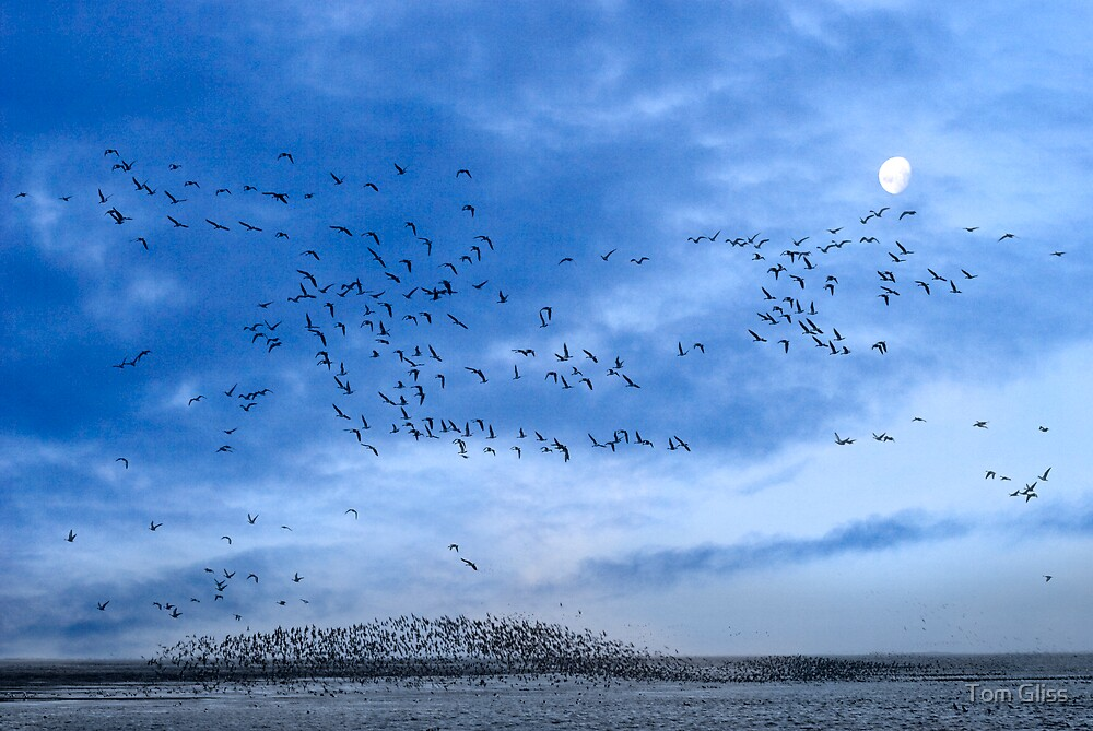 Migration by Tom Gliss