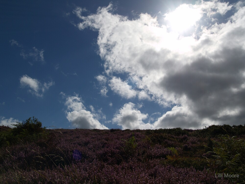 heather on a hill with bright white clouds by Lilli Moore