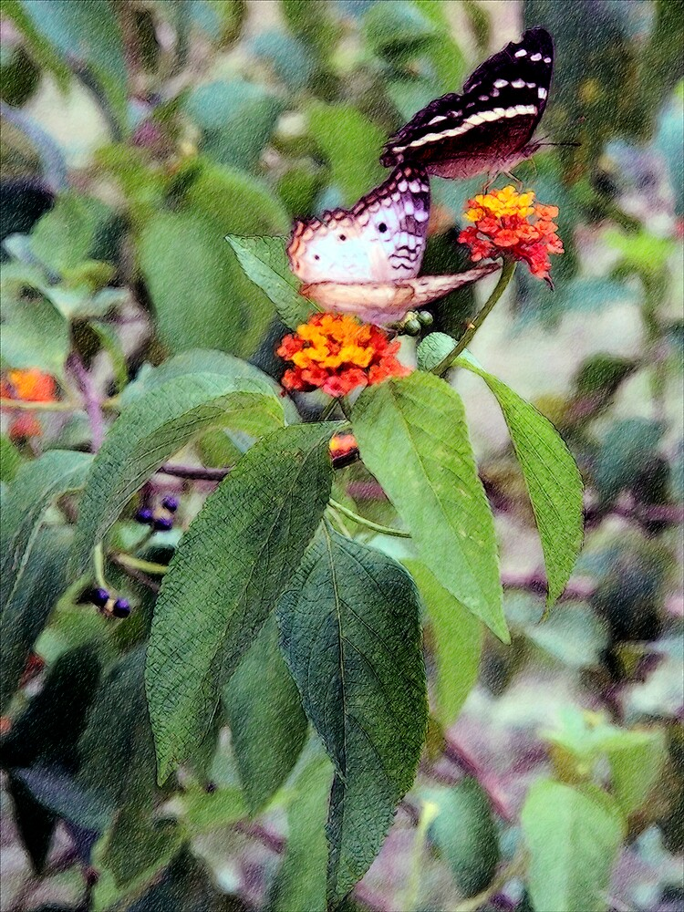 Two Peacock Butterflies On Lantana by DigitalMuse