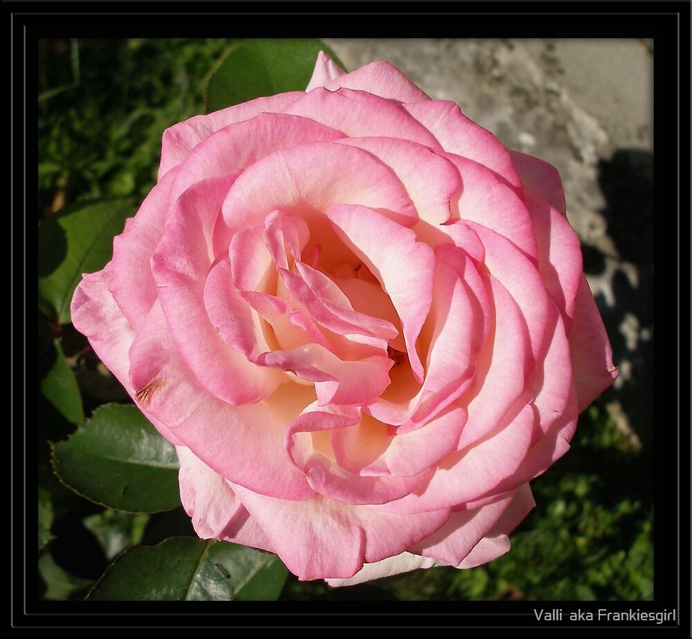 Pink Heart by Valli  aka Frankiesgirl