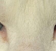 Look Into My Eyes ......... by michelleduerden
