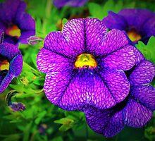 Purple lovers' flower by ♥⊱ B. Randi Bailey