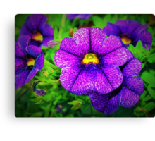 Purple lovers' flower Canvas Print