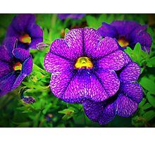 Purple lovers' flower Photographic Print