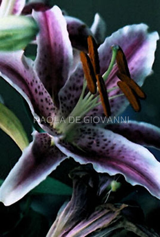 LILIES I by PAOLA DE GIOVANNI