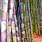 Bamboo 1 by DigitalMuse