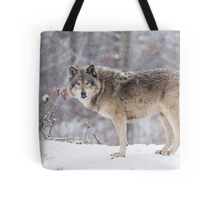 A lone Timber Wolf in the snow Tote Bag