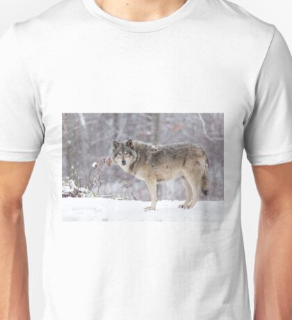 A lone Timber Wolf in the snow Unisex T-Shirt