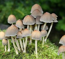 Woodland Fungi by Andyjloft