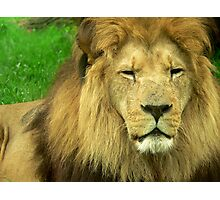 Big Lion Photographic Print