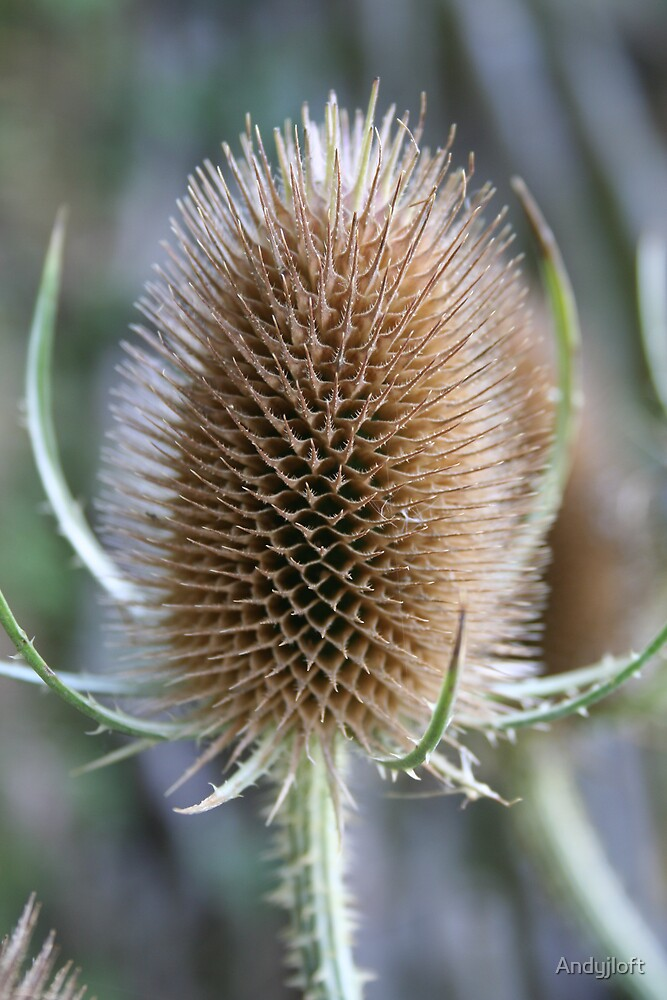 Teasle by Andyjloft