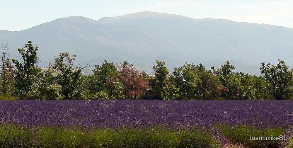 Lavender Fields by Joandmike81